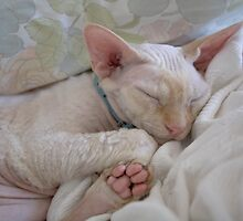 Oliver Sleeping by Glennis  Siverson