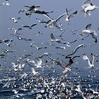 Flock of seagulls in the sea and in flight, Marseille, France. by Sami Sarkis