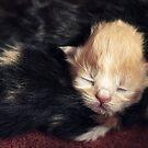 Cuteness!! by micklyn