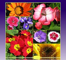Sunkissed Flowers Collage by BlueMoonRose