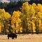 Yellowstone Autumn by Kent Keller