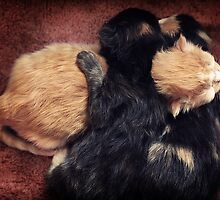 Kitten Cuddle by micklyn