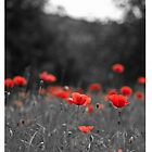 Poppy iPhone Case by Karen Havenaar