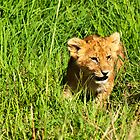Happy Lion Cub by evilcat