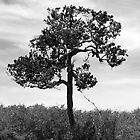 Solitary Tree by evilcat