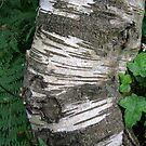 Stripey Bark by KatDoodling
