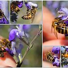 The Sweet Nature of Honey Bees by Betsy  Seeton