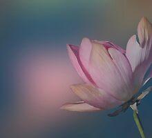 Lotus  by Jenny Dean
