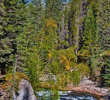 Canada. Canadian Rockies. Jasper National Park. Maligne Canyon. by vadim19