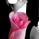 iPhone 4 Case--A Special Rose by JoeDavisPhoto
