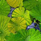 Waterlilies in High Dynamic Range case for iPhone 4/4S by njordphoto