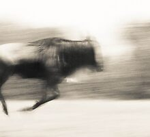 Wildebeest Abstract by Jill Fisher