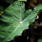 Leaf - iPhone Cover by Richard Owen