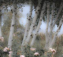 Rose and Birch by Lynn Wiles