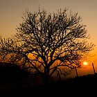 Sunset Tree by Anne Gilbert