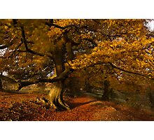 Leafy Lane Photographic Print