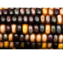 Ornamental Corn Photographic Print