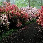 Azalea Walkway by Deborah Crew-Johnson