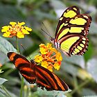Flower Friends - Tiger & Malachite by Lepidoptera