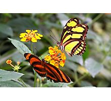 Flower Friends - Tiger & Malachite Photographic Print