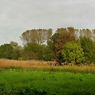 Autumn landscape with Giant Hogweed - panorama by steppeland