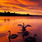 Swan Lake by Brian Kerr