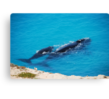 Southern Right Whale and calf Canvas Print