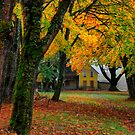 Fall At The Farm by Charles &amp; Patricia   Harkins ~ Picture Oregon
