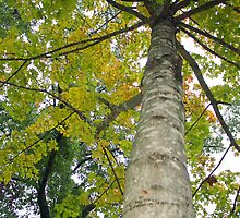 Signs of Fall by Susan Blevins