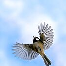 Chickadee in flight - Designer iphone case by Renee Dawson