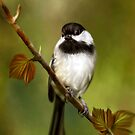 Autumn Chickadee - Designer iPhone 4-4S Case by Renee Dawson