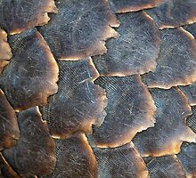 Pangolin Scales by Michael  Moss