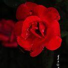 Crimson Lady  by © Joe  Beasley IPA