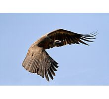 I Am Much Better Looking In Flight Photographic Print