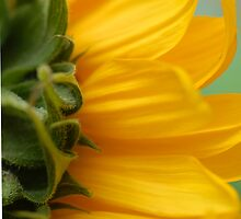 Hello Sun ! by vbk70