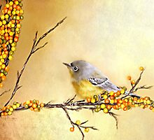 Autumn Warbler - Designer iPhone 4-4S Case by Renee Dawson