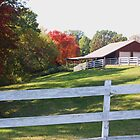 MORE BARNS by Pauline Evans