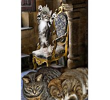 ⊱✿ ✿⊰⊹ I Just Can't Wait 2 B King Cat iPhone Case ⊱✿ ✿⊰⊹ by ╰⊰✿ℒᵒᶹᵉ Bonita✿⊱╮ Lalonde✿⊱╮