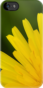 iPhone Case - Dandelion Beauty by Orla Cahill Photography