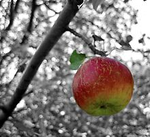 Apple A Day by lindsycarranza