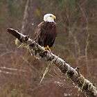 Skagit River Bald Eagle (Small) iPhone case. by Todd Rollins
