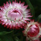 Wild Flowers of the West by myraj