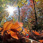 Autumn - Dunrobin Ontario by Debbie Pinard