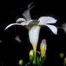 Floribus by BrightBrownEyes