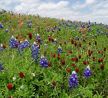 Bluebonnet  Red Clover and Indian Paintbrush by Carolyn  Fletcher