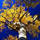 Blue and Gold by Matt Farley