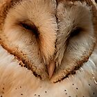 Barn Owl - Close up and personal by JMChown