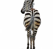 Zebra - I-phone case by Teresa Zieba