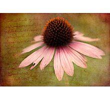 Sun Hat writings Photographic Print