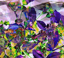 Euphor(b)ia by Melissa Hillard
